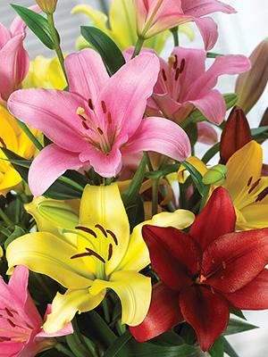 Bulk LA Hybrid Lilies