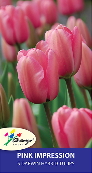 Pre-packed Tulips