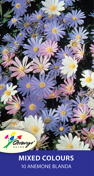 Anemone Blanda Mixed, pack of 10