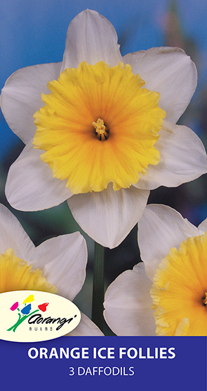 Daffodil Orange Ice Follies - Pack of 3