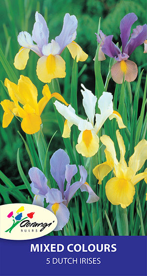 Dutch Iris Mixed - Pack of 5 or 10