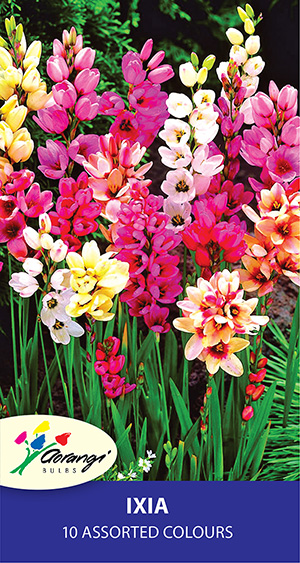 Ixia Mixed, pack of 10