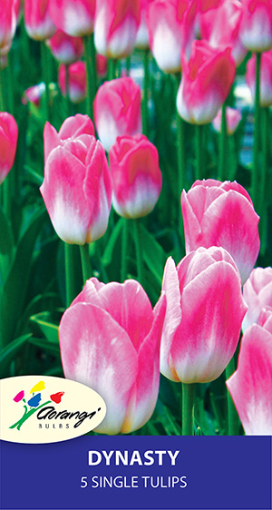 Tulip Dynasty, pack of 5