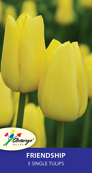 Tulip Friendship, pack of 5