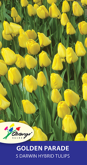 Tulip Golden Parade, pack of 5