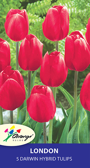 Tulip London, pack of 5