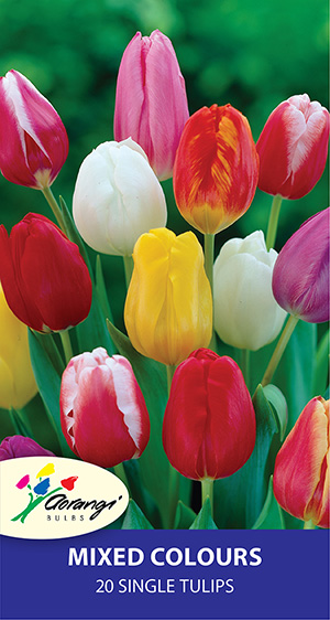 Tulip Mixed, pack of 20