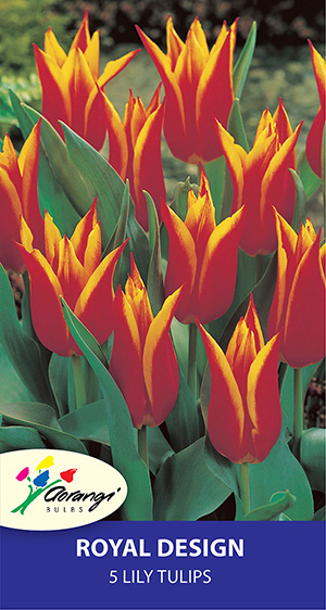 Tulip Royal Design, pack of 5