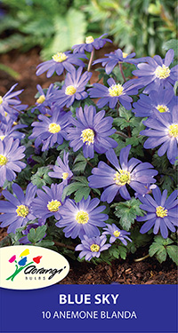Anemone Blanda Blue Sky - 10 Bulbs