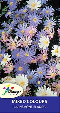 Anemone Blanda Mixed - 10 Bulbs