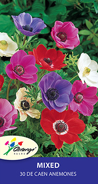 Anemone De Caen Mix, pack of 30, size 3/4