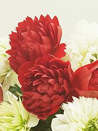 Anemone Fullstar Red