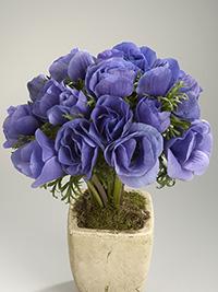 Anemone Galilee Blue