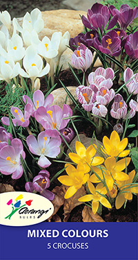 Crocus Mixture, pack of 5