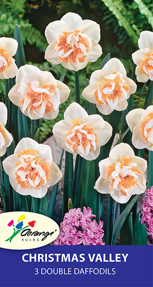 Double Daffodil Christmas Valley - Pack of 3