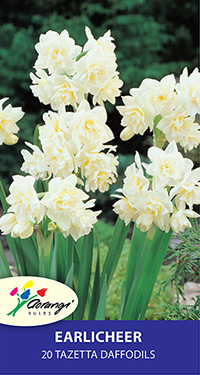 Daffodil Erlicheer, pack of 20