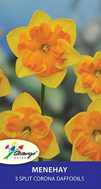 Split Corona Daffodil Menehay - Pack of 3