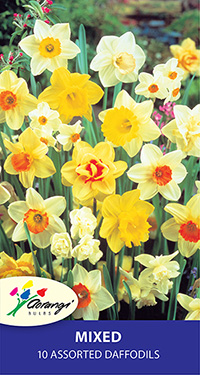 Daffodil Mixed, pack of 10