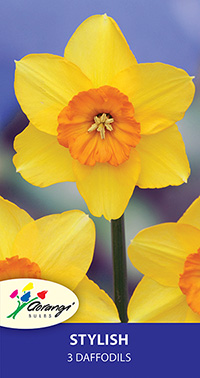 Daffodil Stylish, pack of 3