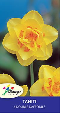 Double Daffodil Tahiti - Pack of 3