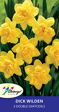 Double Daffodil Dick Wilden - Pack of 3