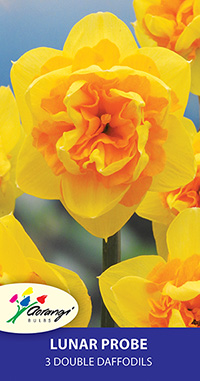 Double Daffodil Lunar Probe - Pack of 3