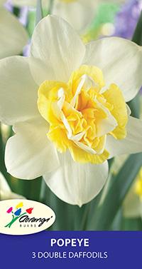 Double Daffodil Popeye - Pack of 3