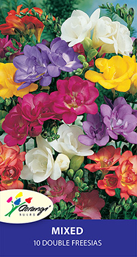 Freesia Mixed Doubles - Pack of 10