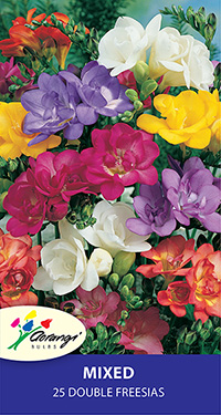 Freesia Double Mixed, pack of 25, size 4/5