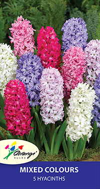 Hyacinth Mixed, pack of 5