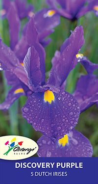 Dutch Iris Discovery Purple - Pack of 5