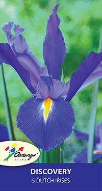 Dutch Iris Discovery, pack of 5