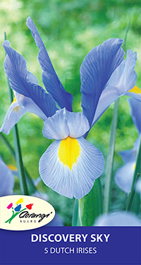 Dutch Iris Discovery Sky, pack of 5