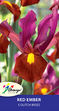 Dutch Iris Red Ember, pack of 5