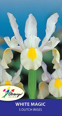Dutch Iris White Magic - Pack of 5