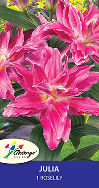 Roselily Juilia - Pack of 1
