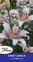 LA Hybrid Lily Sweet Zanica, pack of 1