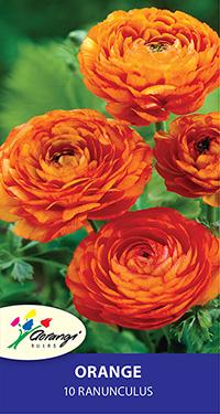 Ranunculus Orange - Pack of 10