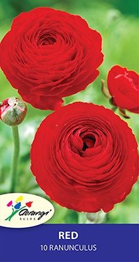 Ranunculus Red - Pack of 10