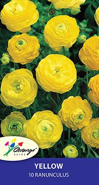 Ranunculus Yellow - Pack of 10