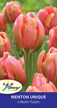 Peony Tulip Menton Unique - Pack of 5
