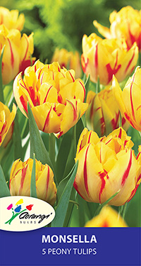 Tulip Monsella, pack of 5
