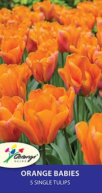 Single Tulip Orange Babies - Pack of 5