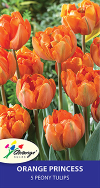 Tulip Orange Princess, pack of 5
