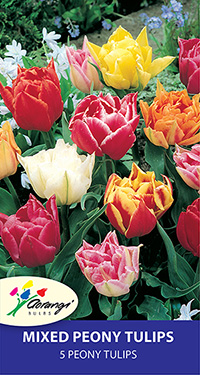 Tulip Mixed Peony, pack of 5