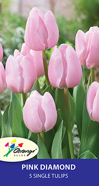 Tulip Pink Diamond, pack of 5