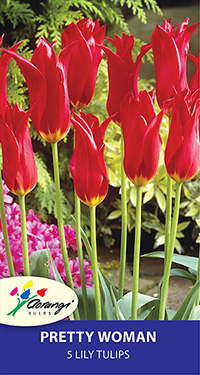 Tulip Pretty Woman, pack of 5