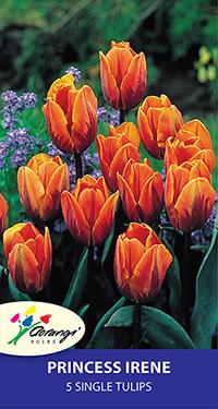 Single Tulip Princess Irene - Pack of 5