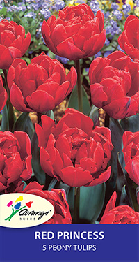 Tulip Red Princess, pack of 5