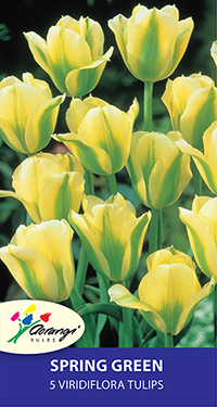 Green Tulip Spring Green - Pack of 5
